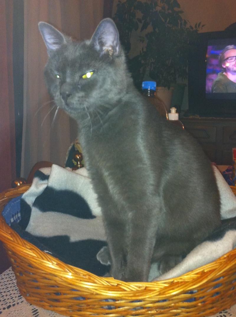 R glisse alias grisou chaton un peu craintif page 3 - Bruit qui attire les chats ...