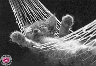 l-cat-10.jpg