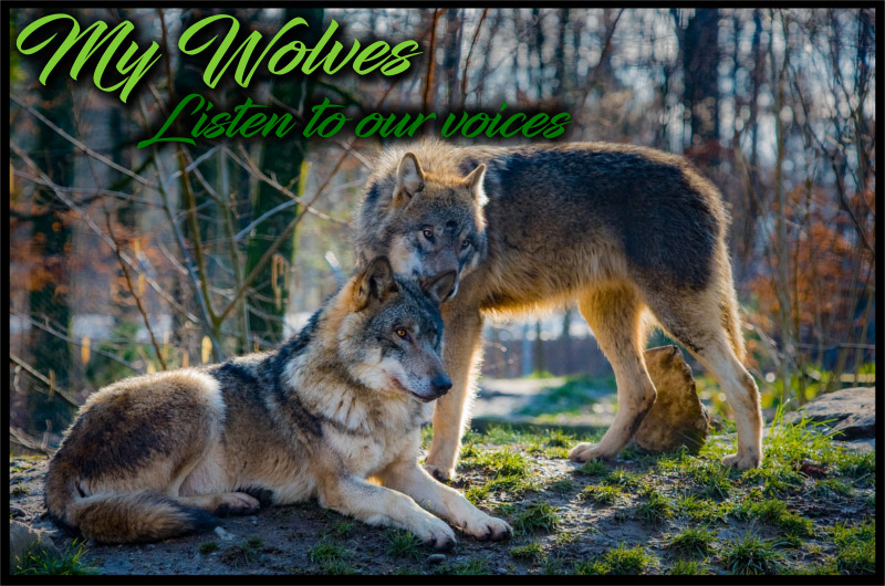 My Wolves