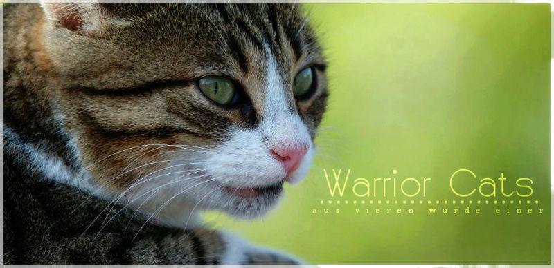 warrior-cats-aus-vier-wurde-eins