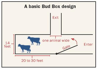 croquis bud box