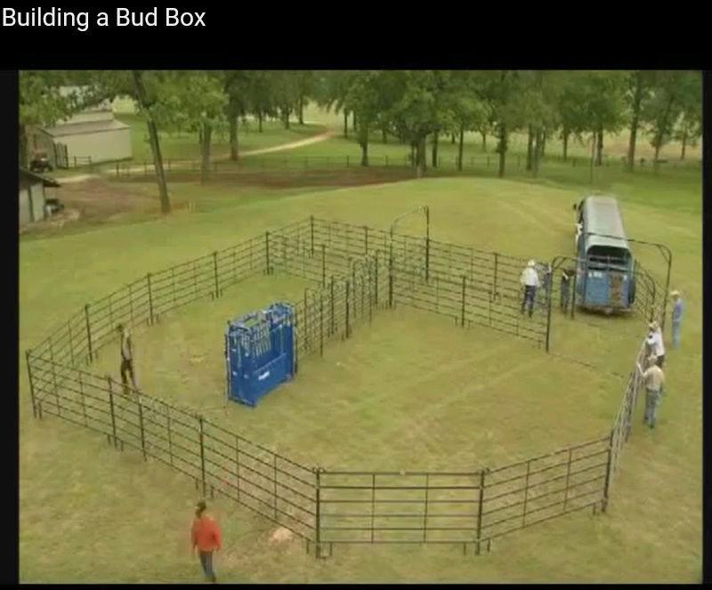 bud box contention bovin