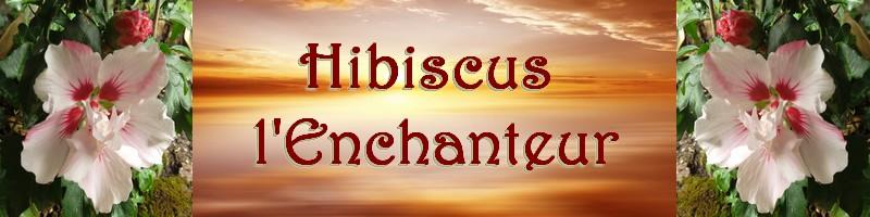 Hibiscus l'Enchanteur