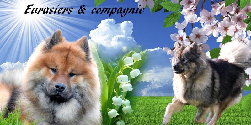 Forum Eurasiers & Compagnie
