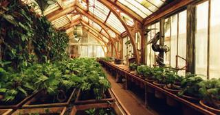 Cours de Botanique