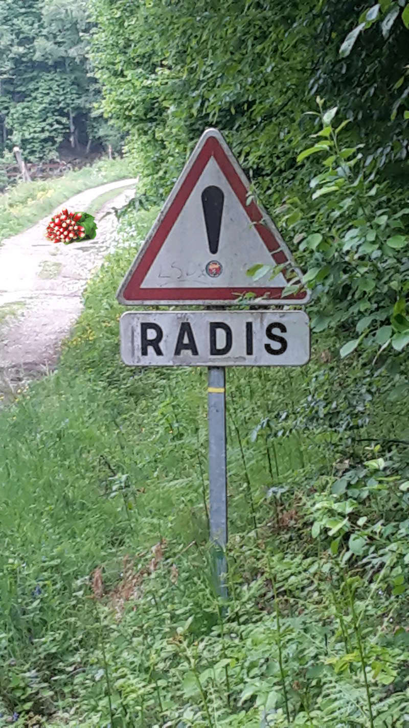 radis12.jpg