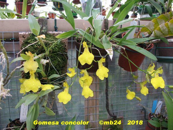 gomesa24.jpg
