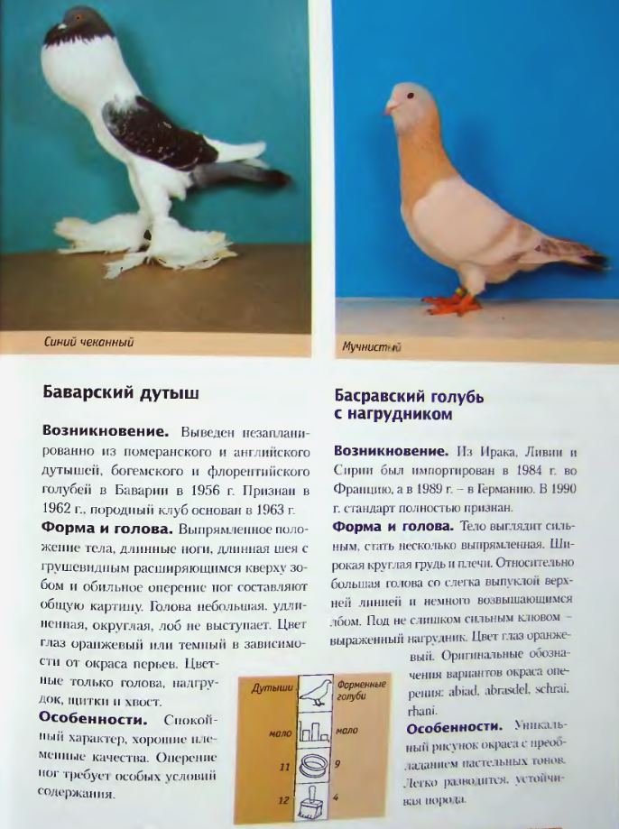 image177.jpg