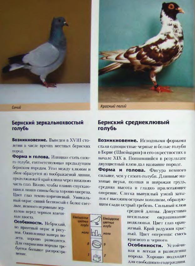 image187.jpg