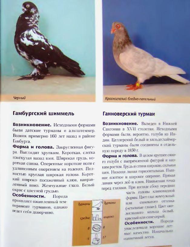 image202.jpg