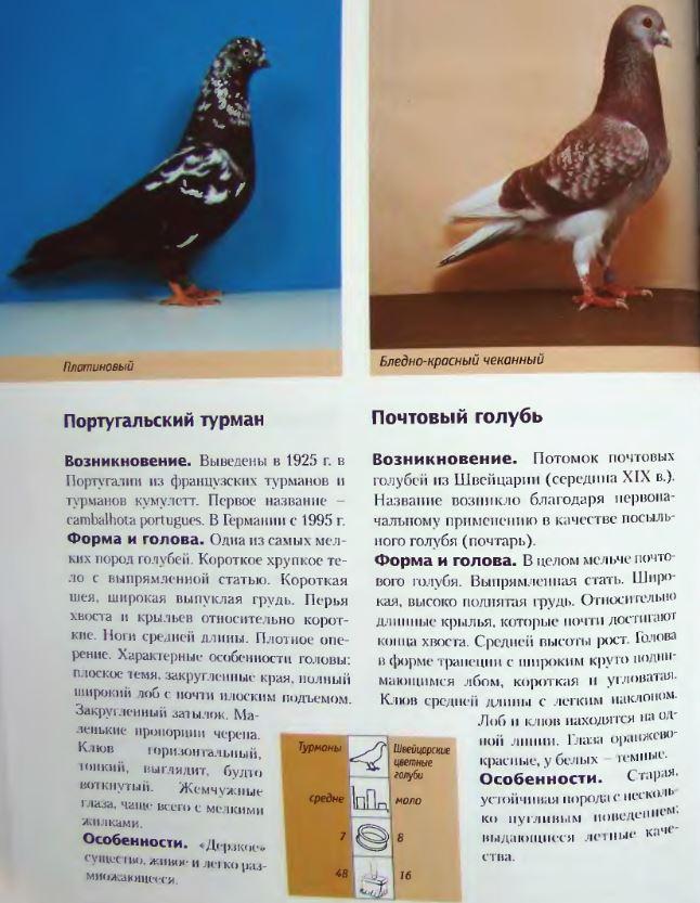 image261.jpg