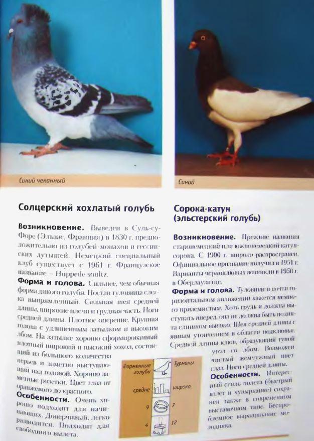image284.jpg