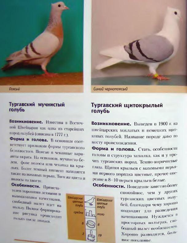 image292.jpg