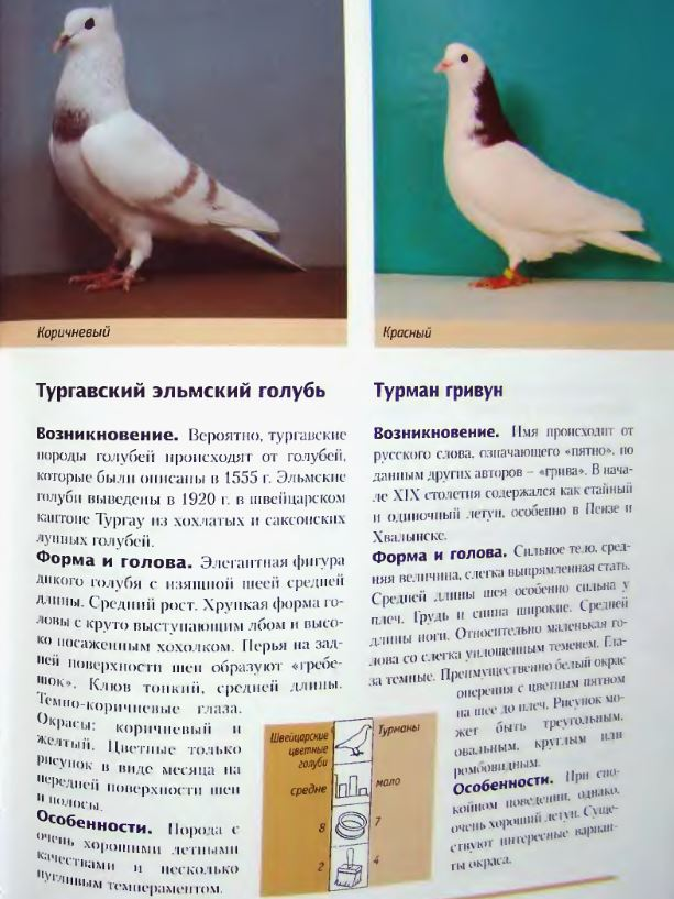 image293.jpg