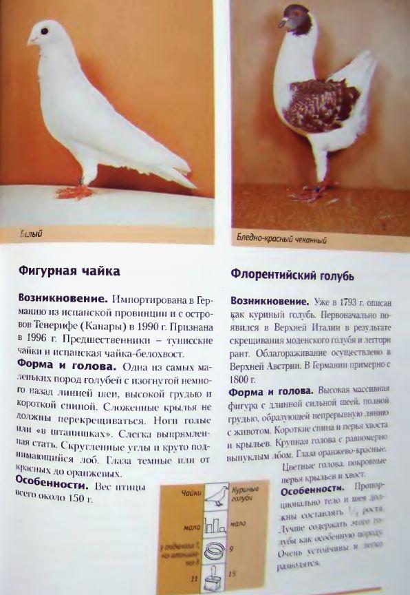 image301.jpg
