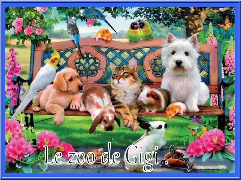Le zoo de Gigi