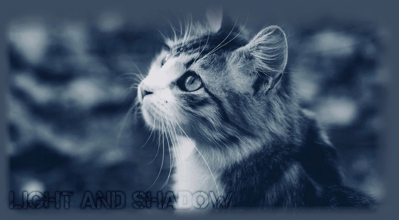 Cats of Light and Shadow