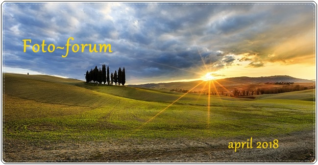 Foto- forum