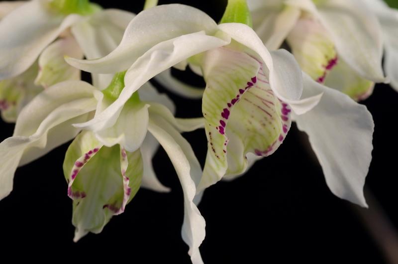 orchid26.jpg