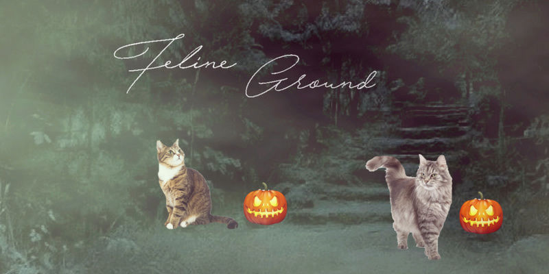 Féline Grounds