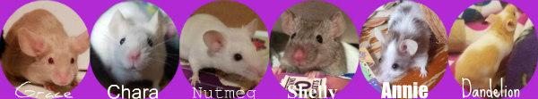 mouse_12.jpg