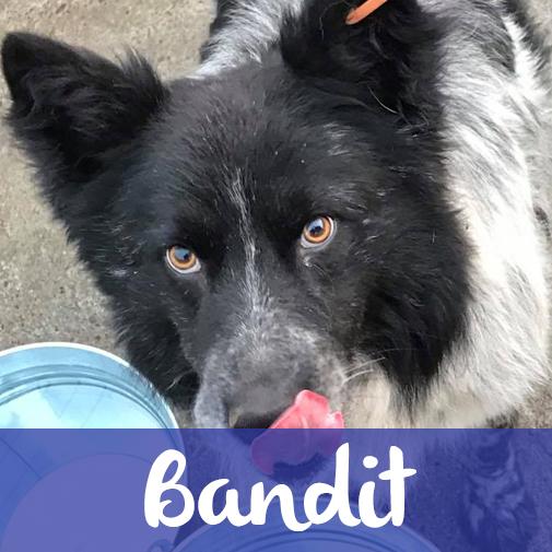 BanditM