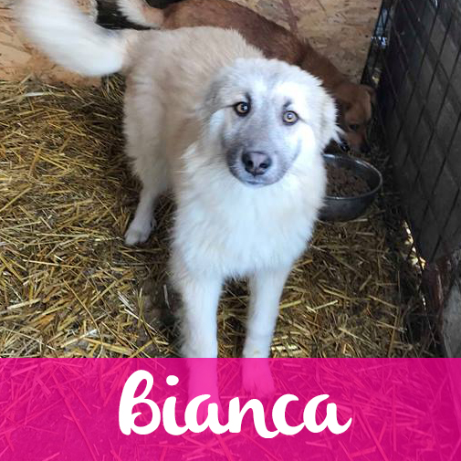 BiancaF