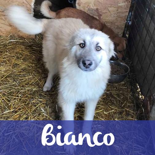 BiancoF