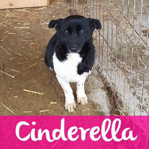 CinderellaF