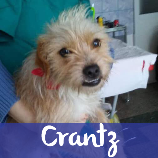 CranzM