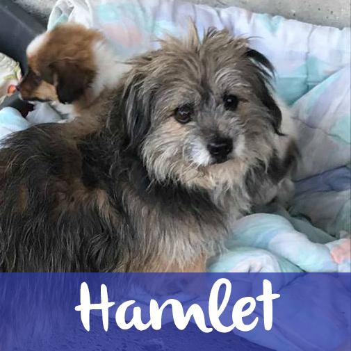 HamletM