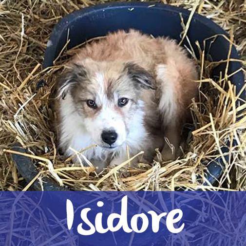 IsidoreF