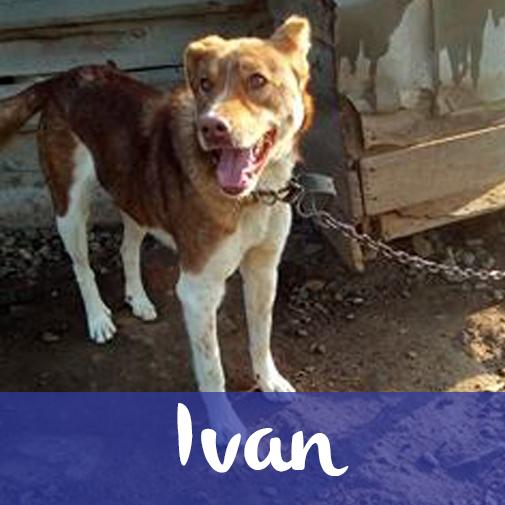IvanM