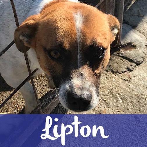 LiptonM