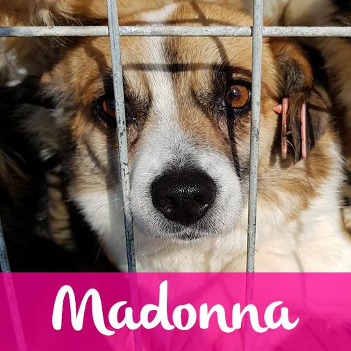 MadonnaF