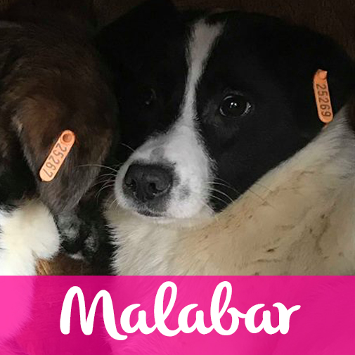 MalabarF