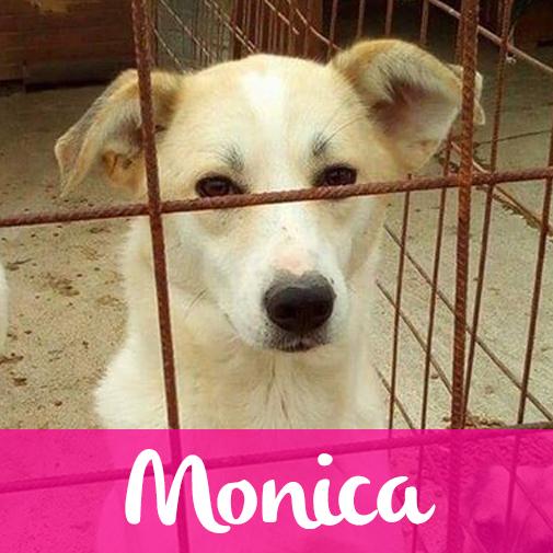 MonicaF