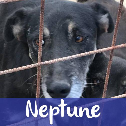 NeptuneM