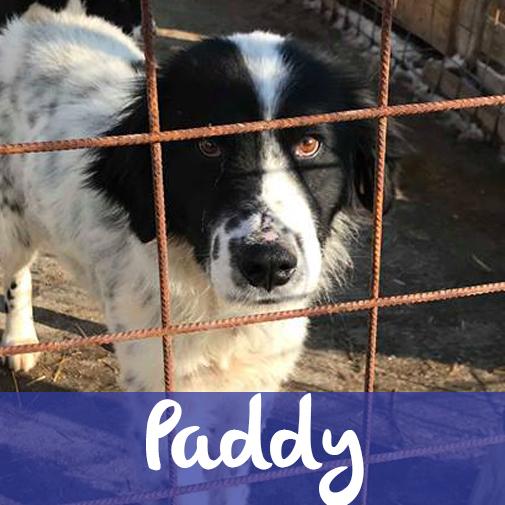PaddyM