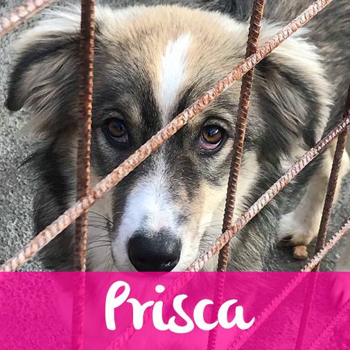 PriscaF