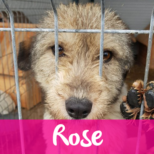 RoseF