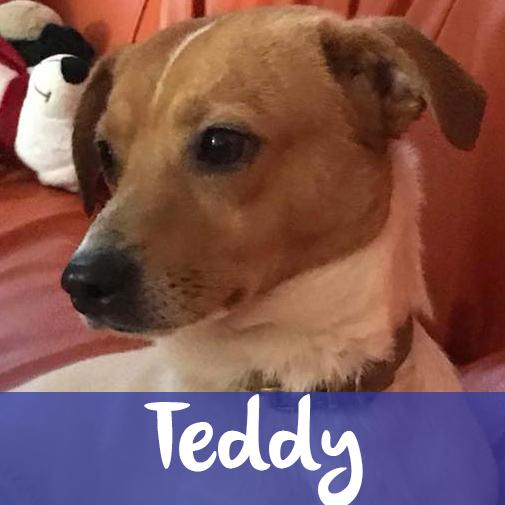 TeddyM