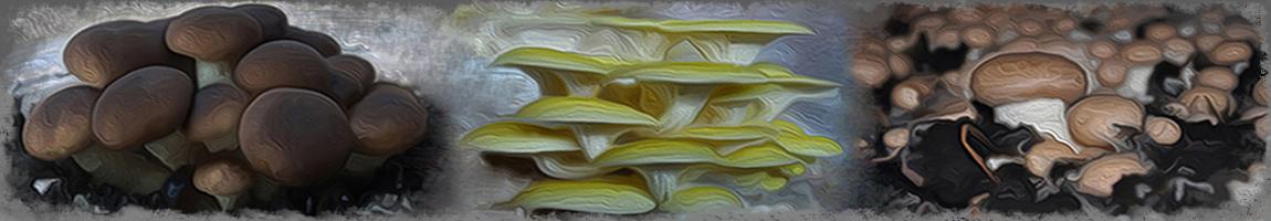 Top Coltivazione Funghi