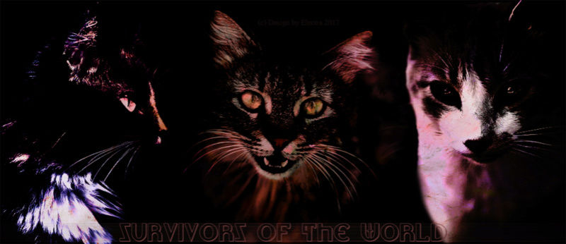 Survivors of the World.