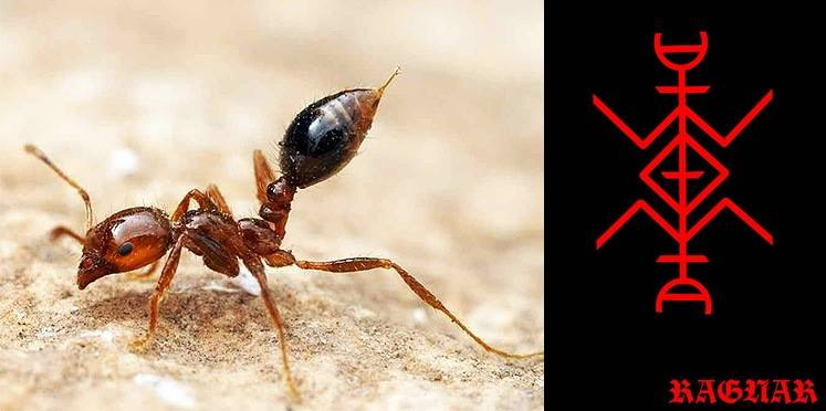 "Став""Invisible Killer""Авторы Ragnar Lodbrok & Lagertha"