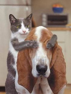 Basset-hound & cats addicts- wouaf & miaou