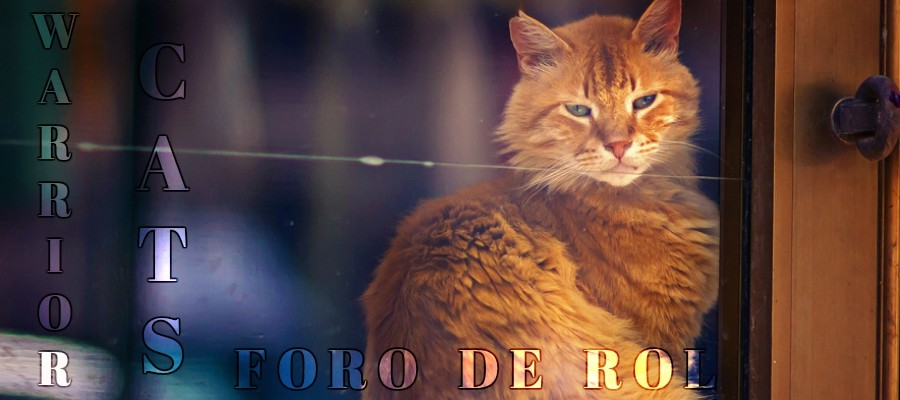The Power of Three | Warrior Cats Rol