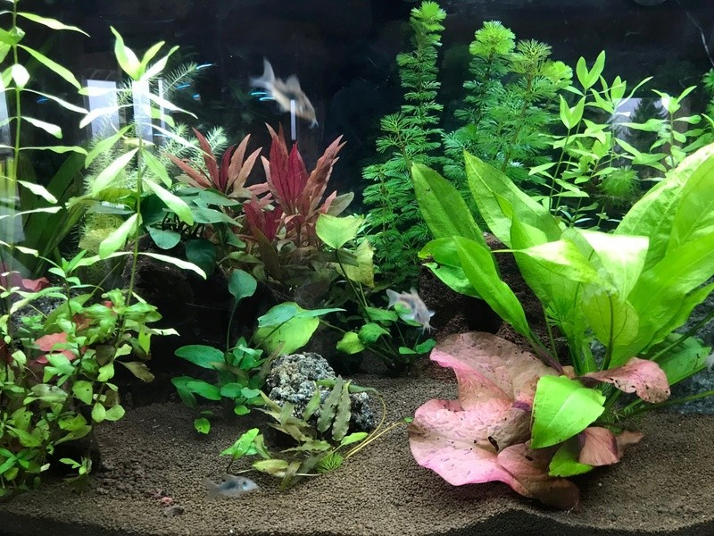 aquari12.jpg