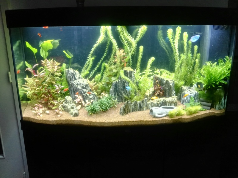 aquari10.jpg