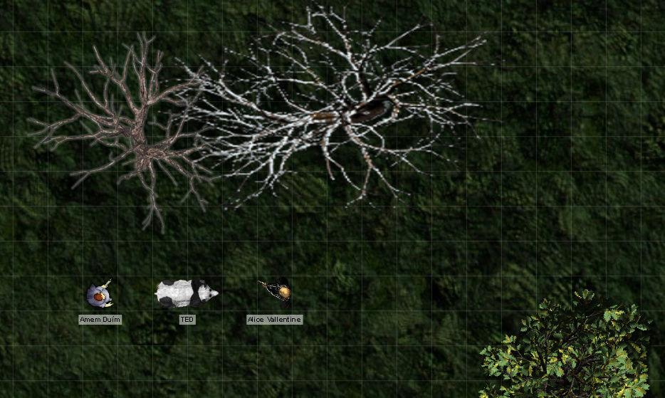 bosque10.jpg
